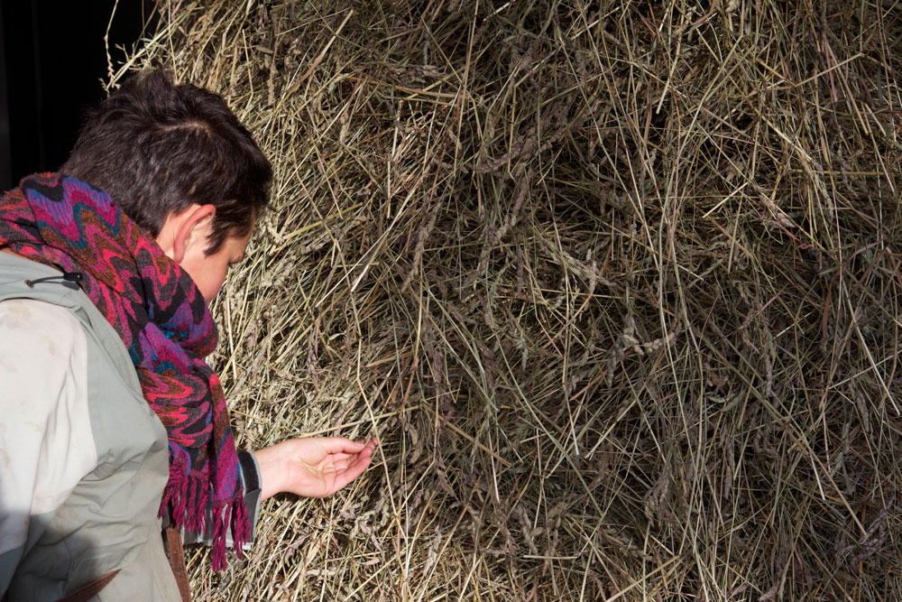 L'installation de la meule Photographie Thierry Boutonnier  Actions et dispositifs : meule de foin, animation GIF, diaporama, lettres au maire pour une banque de semences, photographie numérique (120 x 83 cm, dibon), herbier Commissariat : Parti Poétique 2013 - Zone Sensible, Saint-Denis