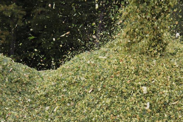Photographie Thierry Boutonnier Enquête, chemin balisé, sculpture végétale. Commande du musée de la Chasse et de la Nature. 2014-16, Domaine de Belval - Ardennes.
