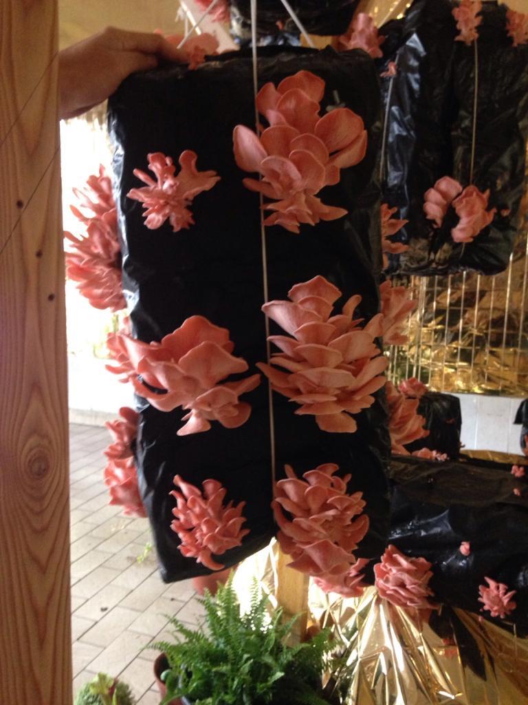 Photographie La Cave à pleurotes Sculpture sociale Élevage de pleurote rose, recyclage de mar de café, couverture de survie, repas gastronomique, enregistrement sonore et vidéo. En coopération avec La cave à pleurote. Commissariat de la nuit verte : Charlotte Huni 2018 Panorama Bordeaux rive droite