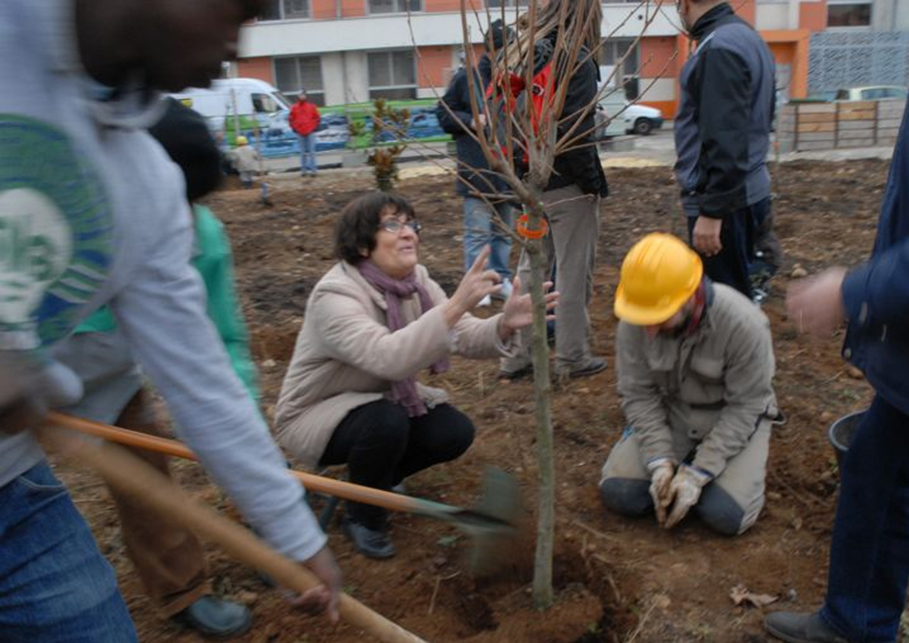 Tree pary 2, transplantations, Photographie : Patrick Della - 2011