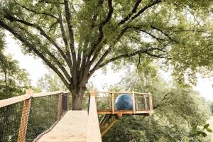 Observatoire en bois de Douglas dans un chêne vivant Photographie : Isabelle Souri - 2018