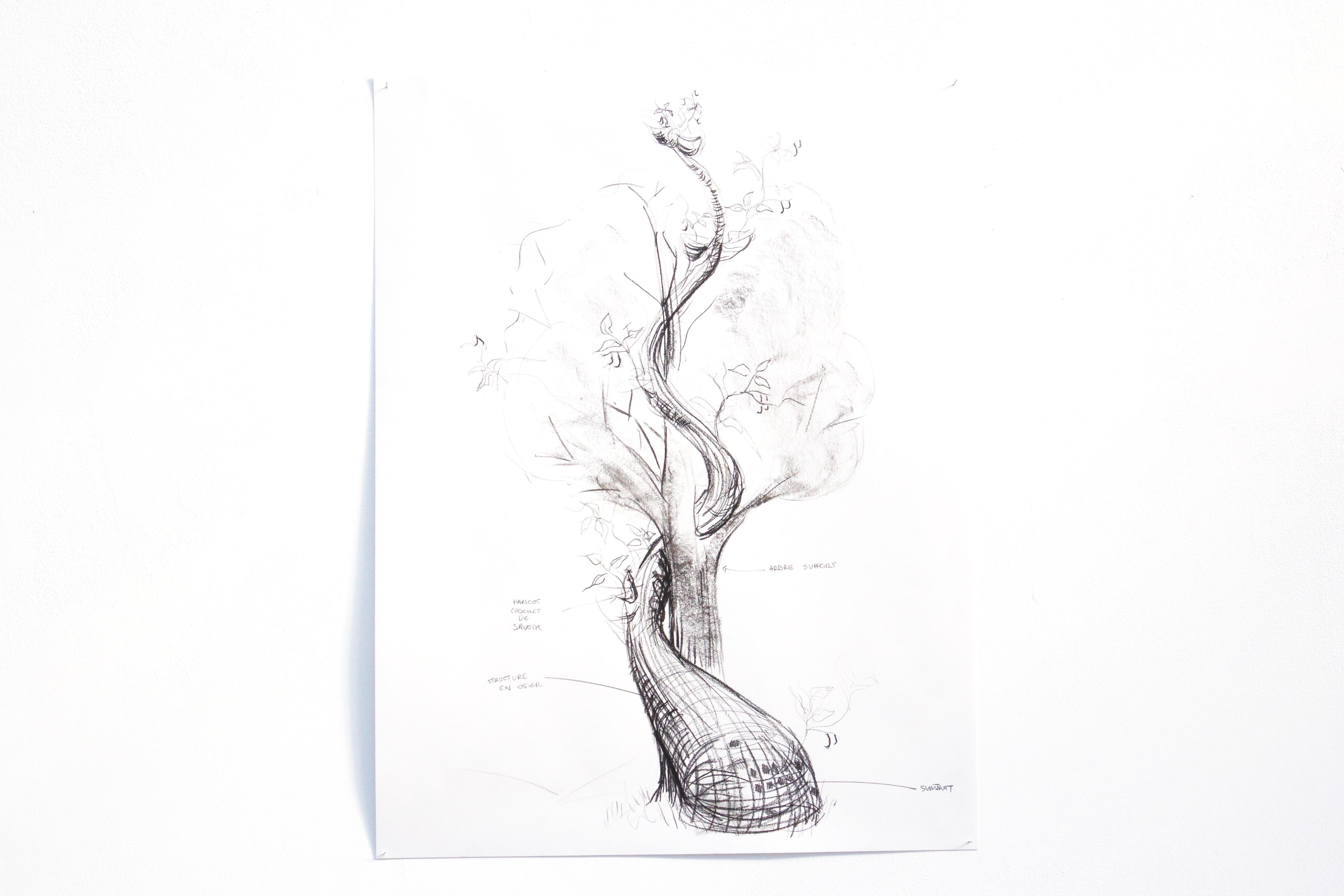 Haricot magique en compagnie d'un arbre, Dessin au fusain, Thierry Boutonnier, 2018