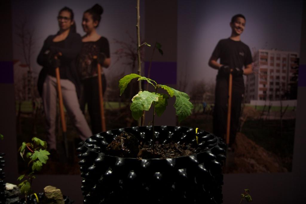 Plant de chêne feral air-pot, anthroposol, table de culture, 2020